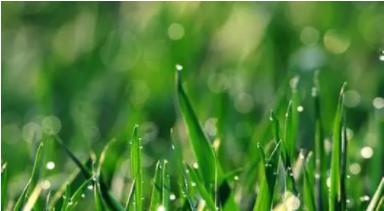 谷雨時節陰轉陽,護肝祛濕輕松養